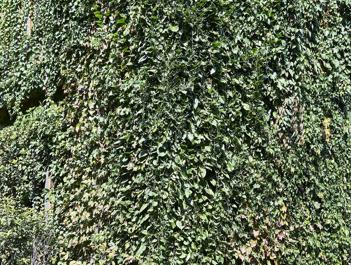 01新植物墙(输出尺寸300乘397厘米)